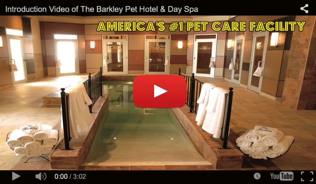 Luxury Dog Boarding The Barkley Pet Hotel & Day Spa
